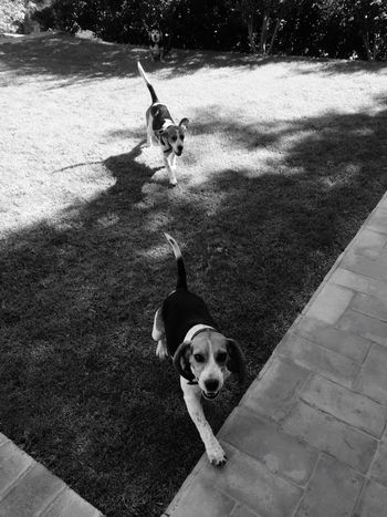 Dog Pets Domestic Animals Animal Themes Mammal One Animal High Angle View Outdoors Pet Collar Dog Lead Day Portrait No People Nature Blackandwhite Pet Portraits