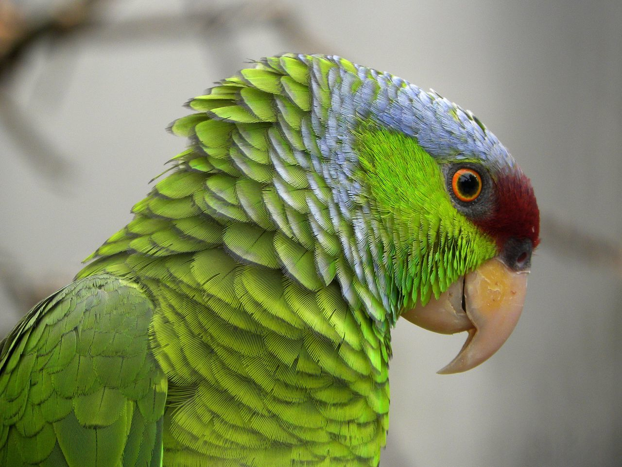Amazon Parrot Eye Em Nature Lover EyeEm Birds Beautiful Animals