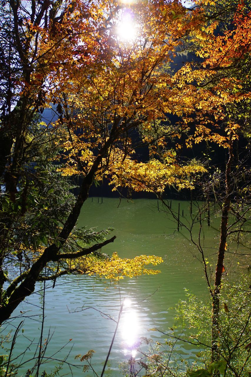 tree, beauty in nature, nature, branch, growth, water, tranquility, lake, scenics, tranquil scene, sunlight, outdoors, reflection, no people, leaf, sun, day, sky