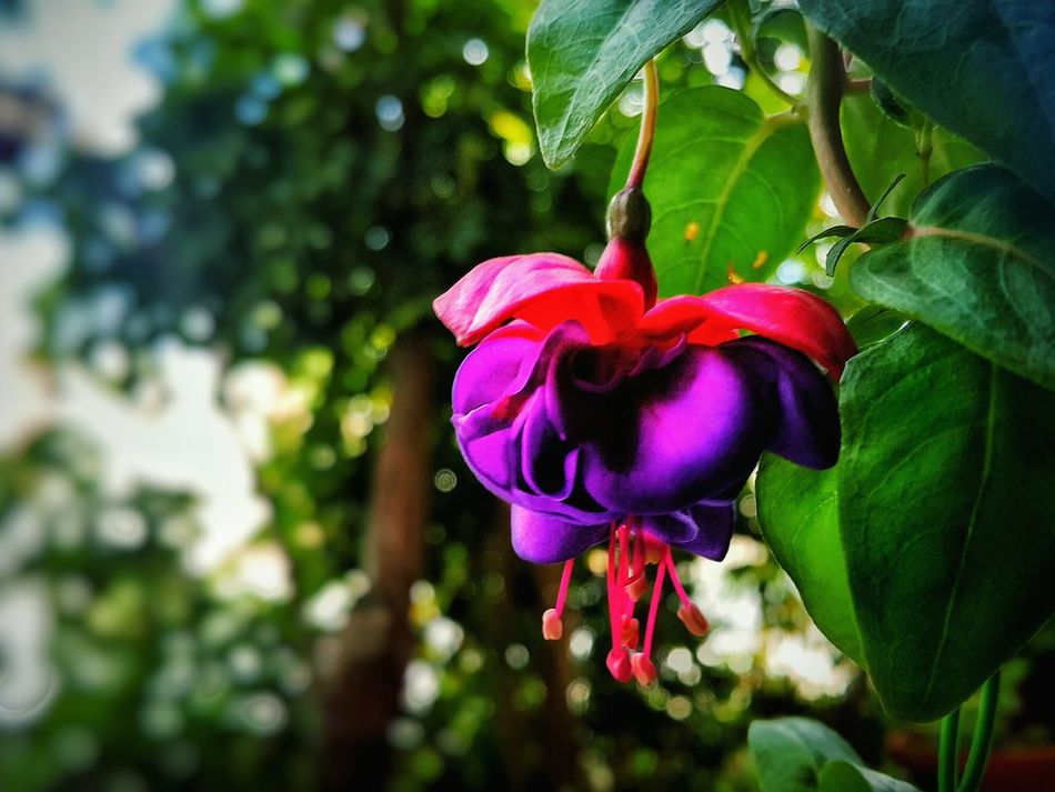 Flower Nature Green Violet Colorful Photography My Camera Dark Eyes