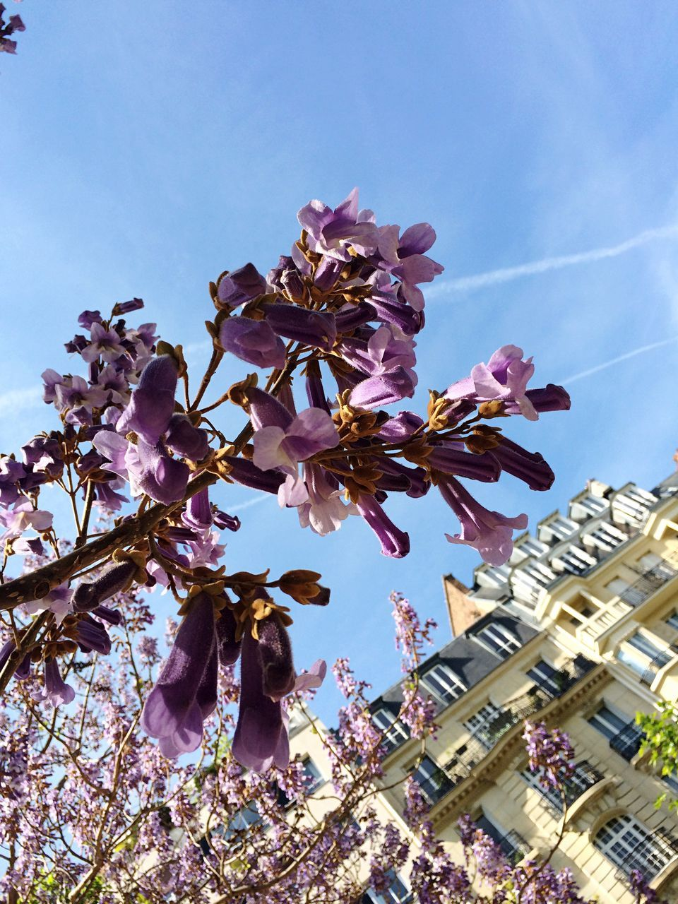 flower, fragility, blossom, low angle view, tree, springtime, growth, beauty in nature, magnolia, petal, branch, freshness, nature, day, botany, pink color, no people, sky, outdoors, flower head, stamen, building exterior, close-up, blooming, clear sky, architecture