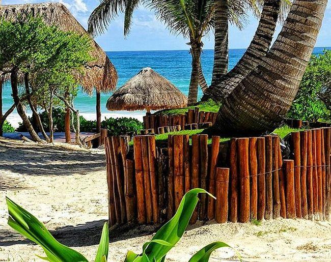* Il luogo ideale per trascorrere la Domenica. Ed il Lunedì, Martedì, Mercoledì... * Domenica BuonaDomenica  Domenicadacoma Vitadaspiaggia Luoghimeravigliosi Paradiso Spiagge Spiaggeincantevoli Spiaggemeravigliose Viaggiare Vacanze Esperienze Esperienzeindimenticabili Esperienzediviaggio Conoscereilmondo Caraibi Caraibico Messico  Spiaggedelmessico Viaggiatoridelmondo Viaggi Viaggio Fotoricordo Fotodiviaggio
