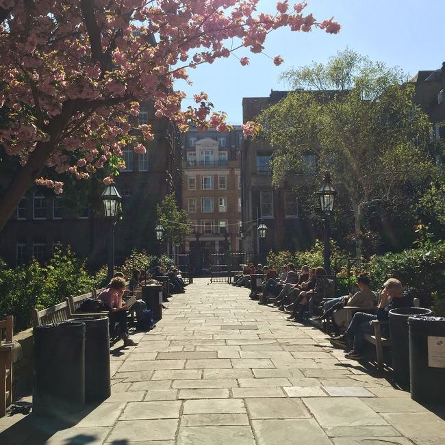 Park scene - London Covent Garden - St. Paul's Church Found On The Roll London Noedit Nofilter Park Covent Garden  Artists Actors Church Sunlight Pathway Outdoors The Great Outdoors - 2016 EyeEm Awards City Life Bench Relaxing Tree Plant Footpath Narrow Sky Blossom