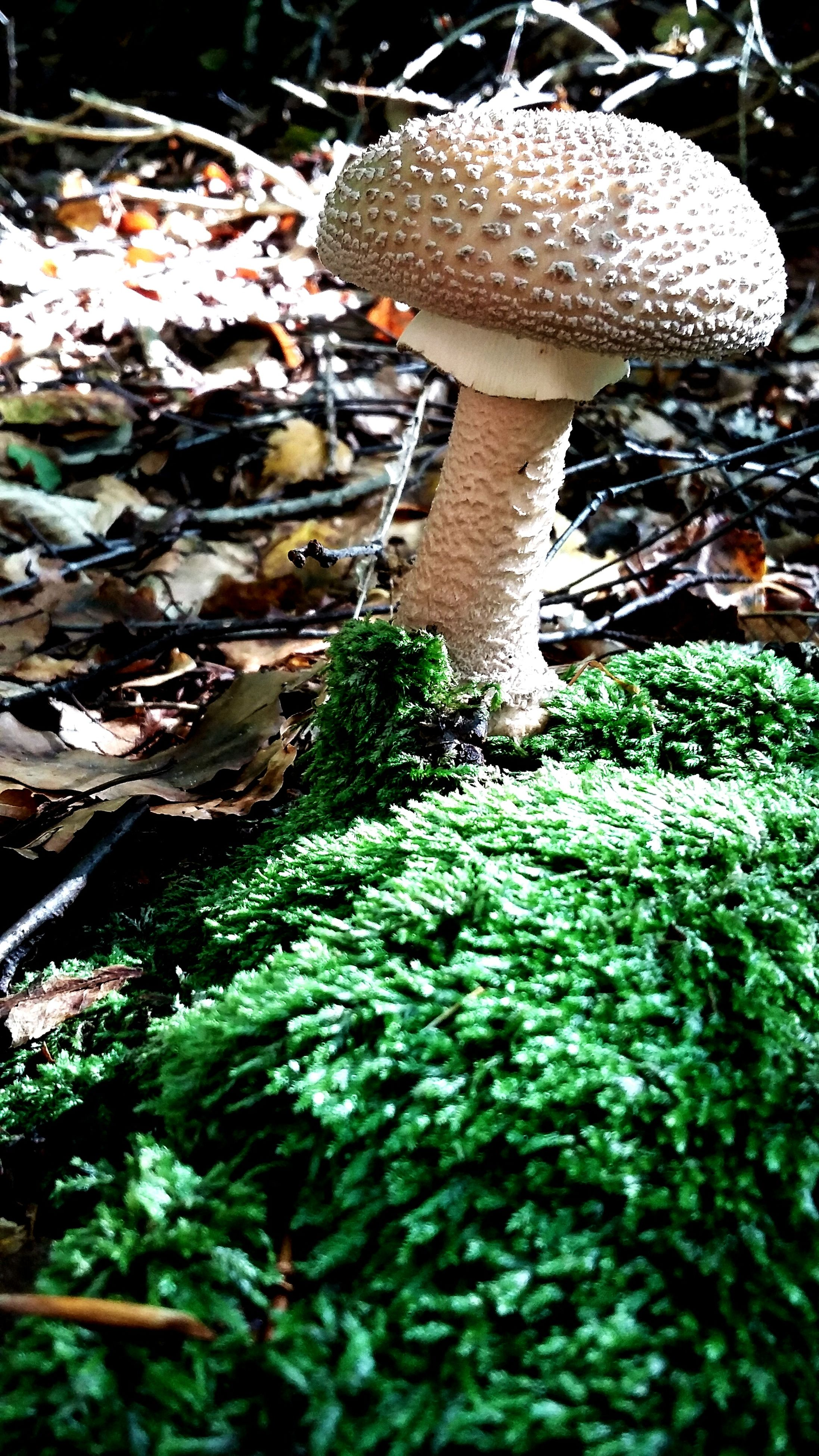 growth, fungus, moss, mushroom, plant, nature, leaf, green color, rock - object, close-up, forest, growing, beauty in nature, high angle view, tranquility, outdoors, freshness, day, no people, tree