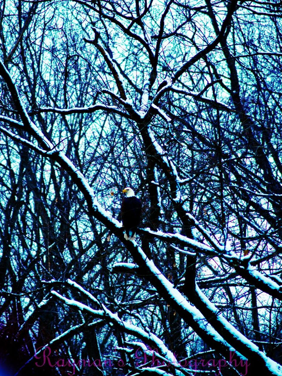 Birdsofprey Bald Eagle Eagle Getolympus Olympus Ilovephotography The Photographer Nature Photography Photography Is My Escape From Reality! Photographer Photography Photo♡ Winter Nature Beautiful Nature Beauty In Nature Enjoying Nature Connected With Nature Naturelovers Creek Down By The Creek