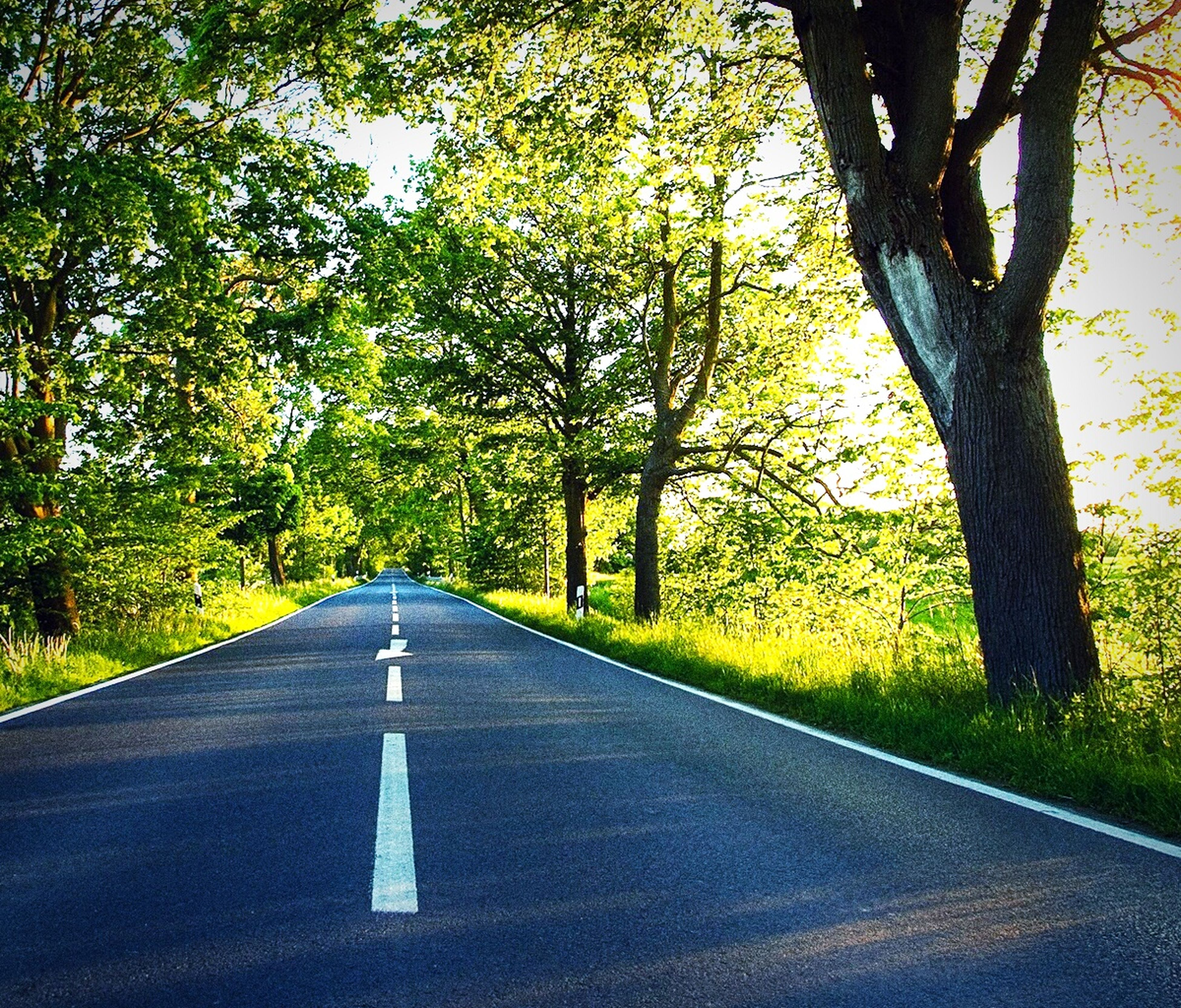 tree, the way forward, road, transportation, road marking, diminishing perspective, vanishing point, empty road, country road, tranquility, asphalt, road sign, street, empty, nature, growth, branch, no people, treelined, tranquil scene