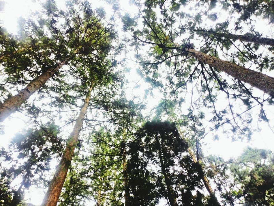 Tree And Sky Sunshine ☀ Beauty