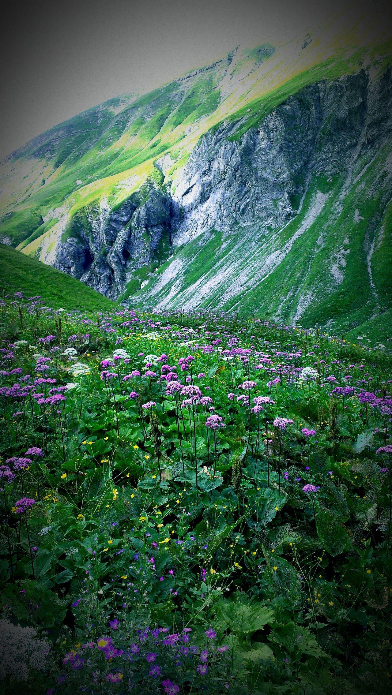Almwiese. Mountains E5 Alpenglühen