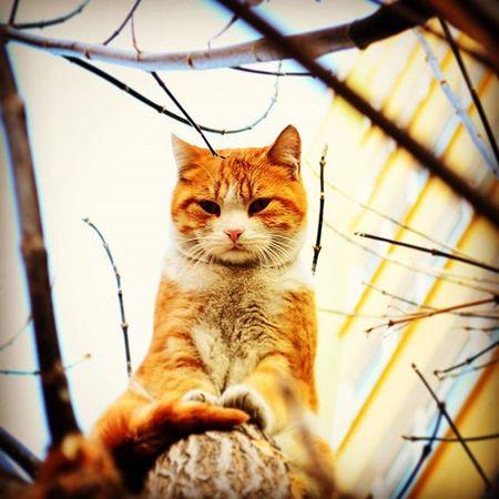 Instagram Instagood Instamood Ankara Cat Yellow Yellowcat Nikon Nikon_photography_ D5100 Ahmetkurnaz @ahmetkurnaz06