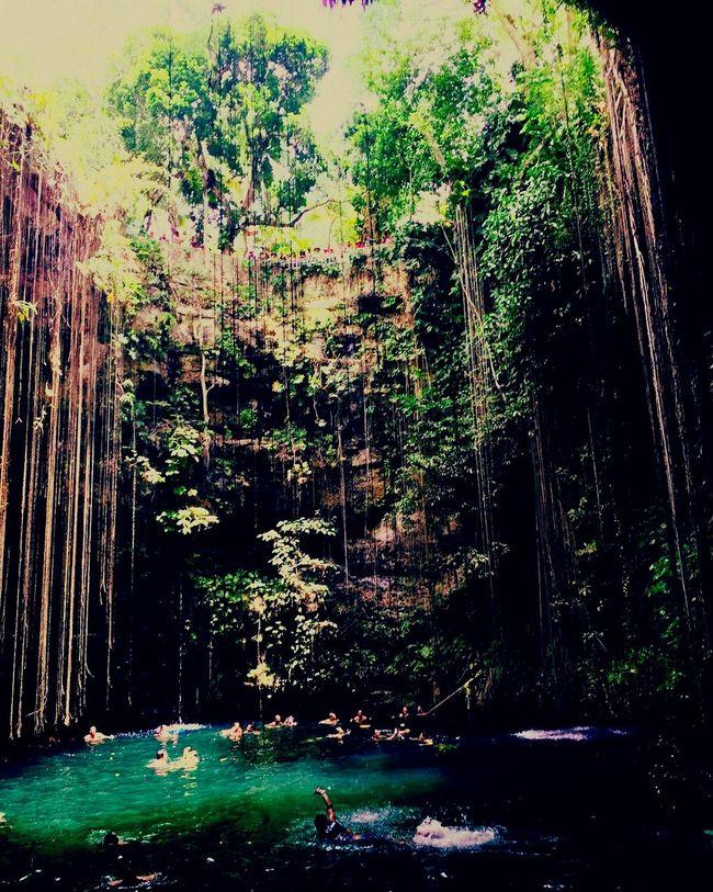Cenotes Mexico Tulummexico Nature_collection Nature Photography