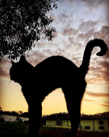 Silhouette One Animal Animal Themes Tree Sky Animals In The Wild Animal Wildlife Nature Cloud - Sky Sunset No People Beauty In Nature Cat Cute Pet Pets Pet Portraits Beautiful Pet Portraits Pet Portraits