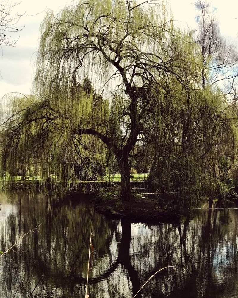 Tree Water Nature Lake Tranquility Reflection Growth Outdoors Tranquil Scene Beauty In Nature No People Scenics Willow Tree Branch Day Sky The Great Outdoors - 2017 EyeEm Awards