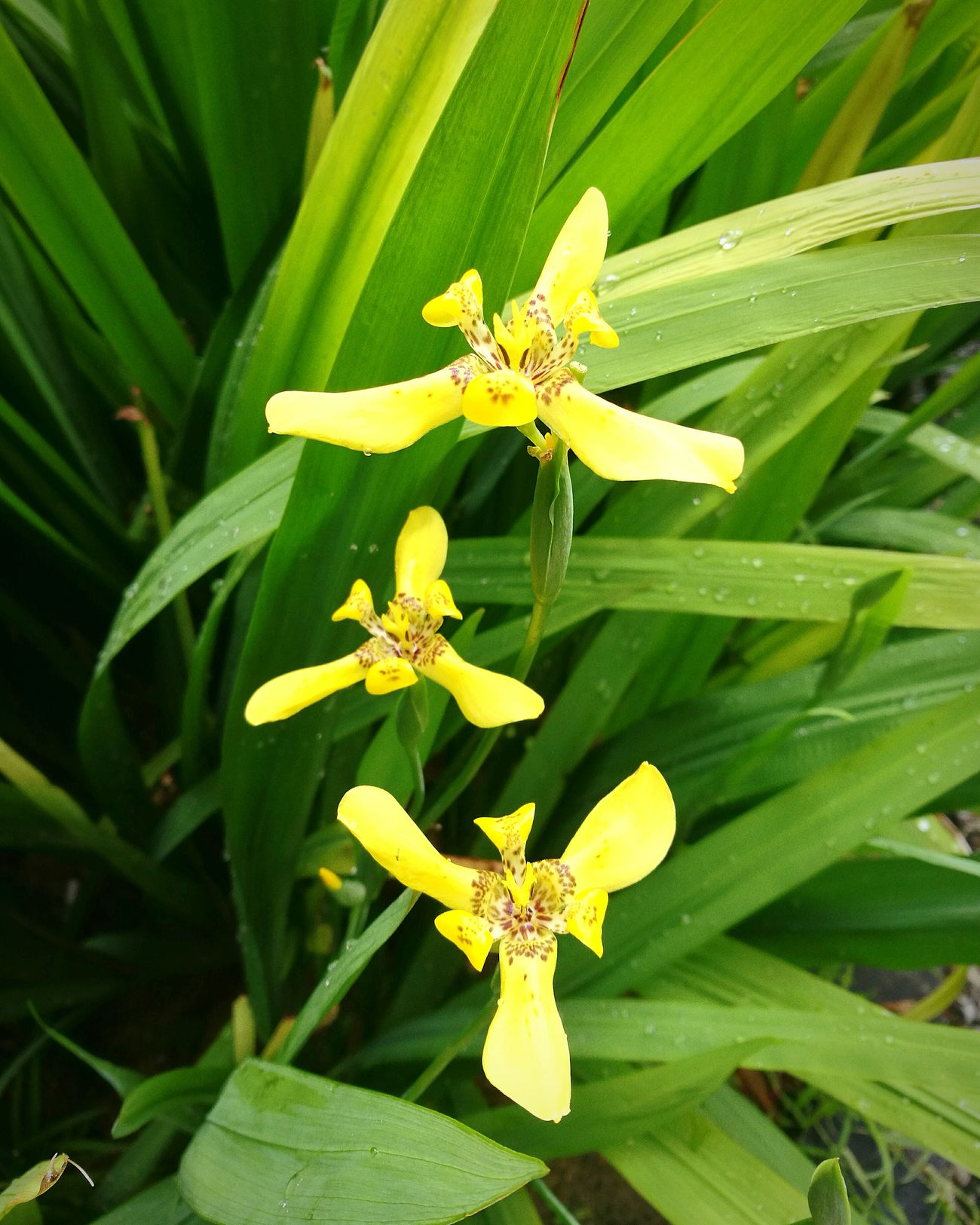 Flower Freshness Growth Yellow Close-up Petal Beauty In Nature Flower Head Nature Green Color Fragility Blooming Blossom In Bloom Orchids Orchid Orchid Blossoms Orchid Flower Orchids Bestflowershot Bestflowerpic