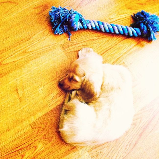 My new puppy Bam Bam