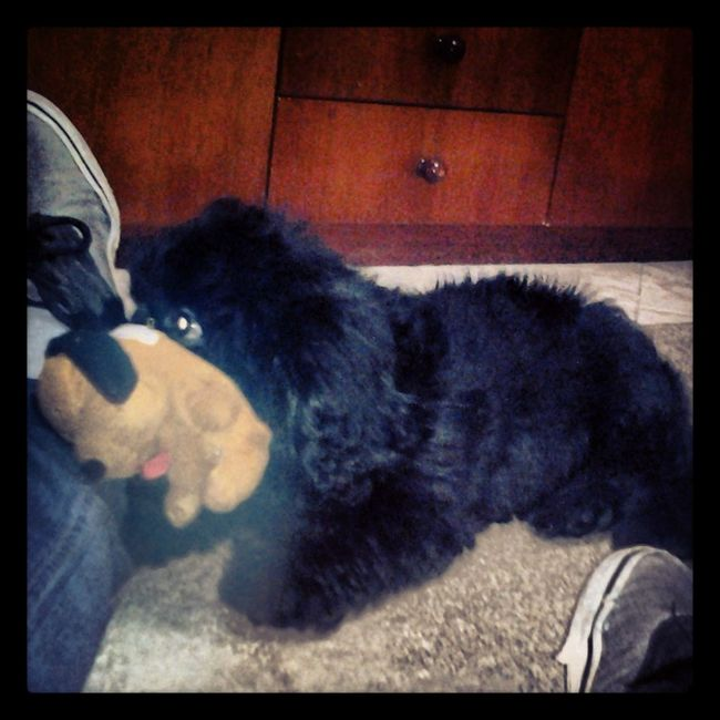 My Dog Is Cooler Than Your Kid. Animais. Eu Amo Meu Cachorro Bruce