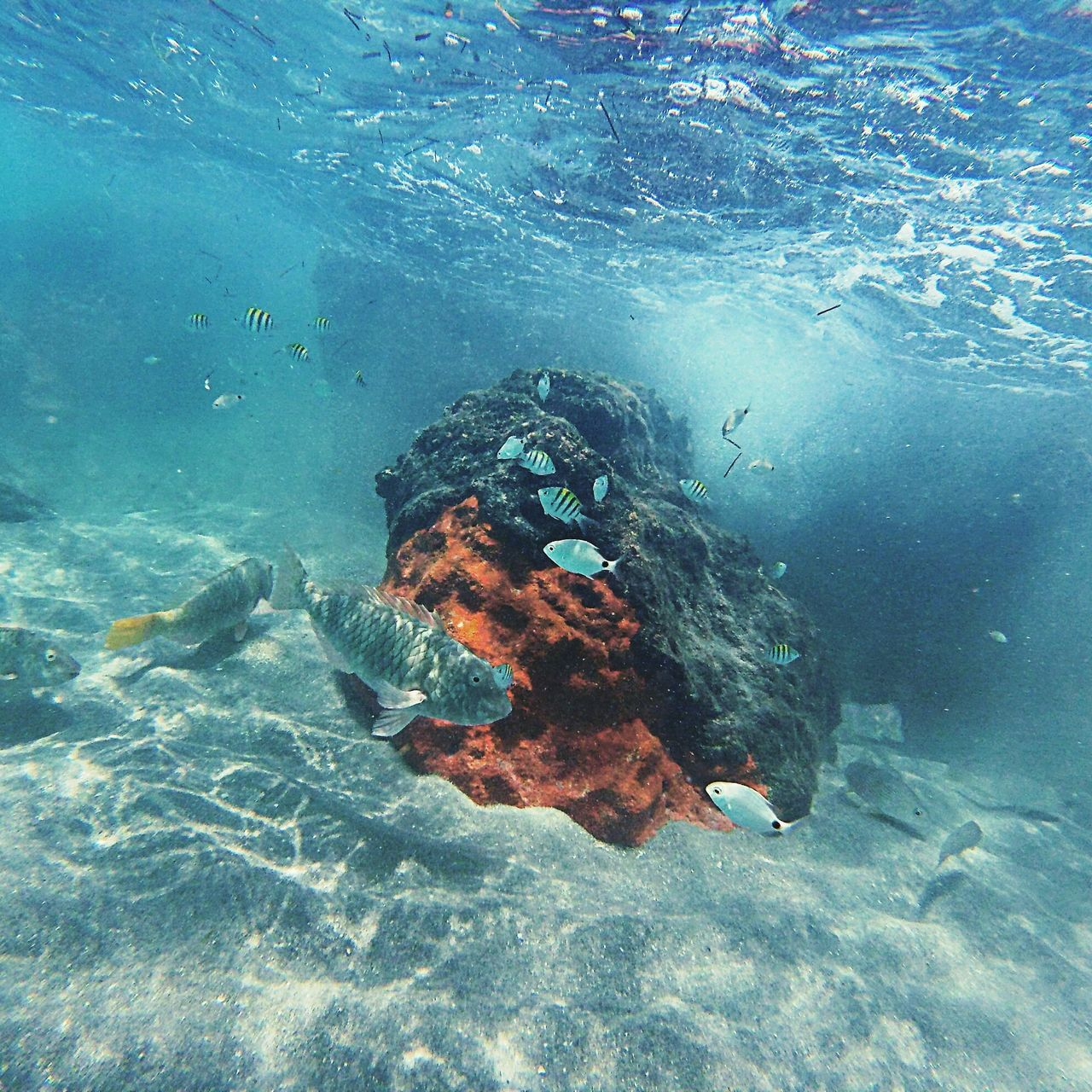 underwater, real people, undersea, water, sea, nature, one person, day, outdoors, people