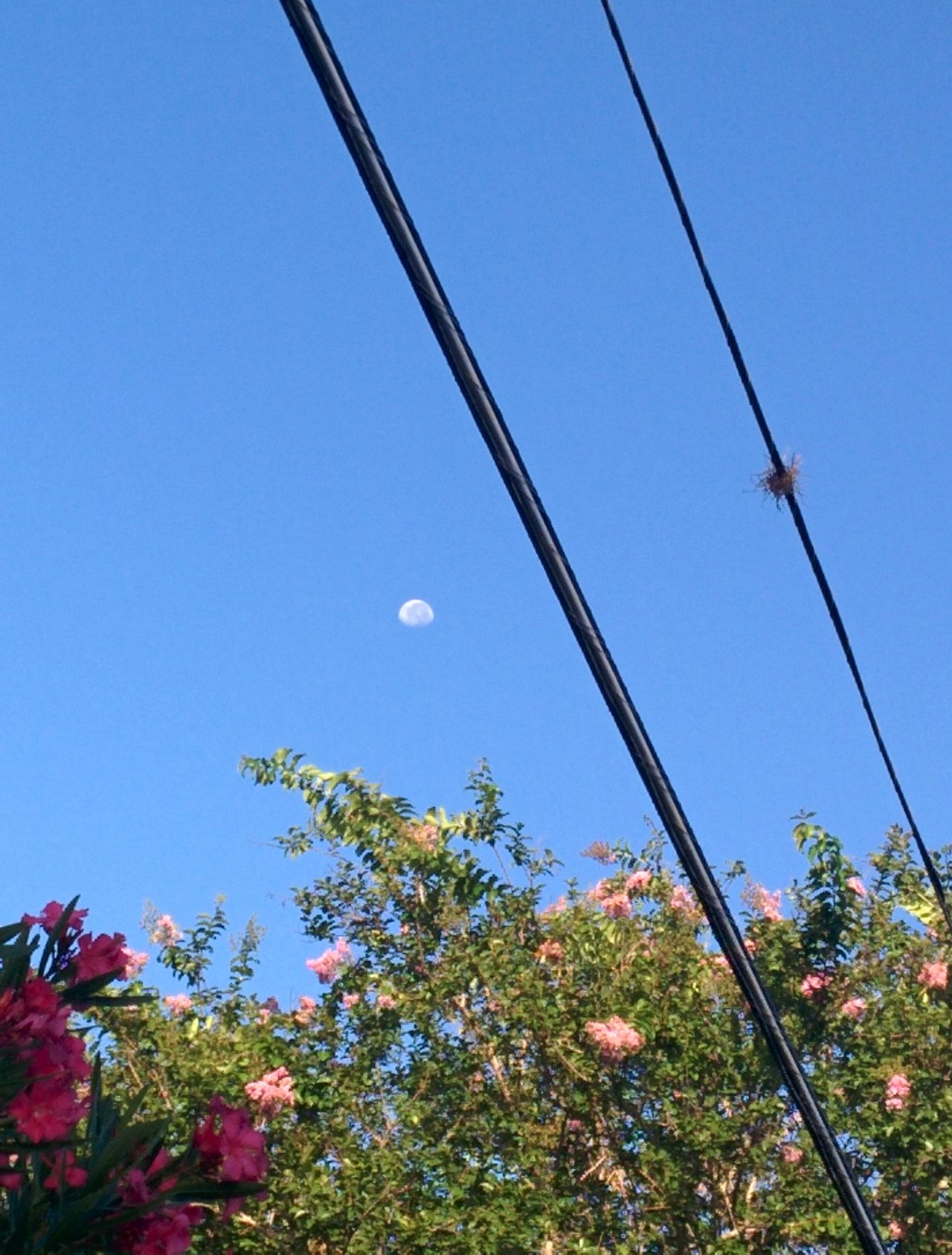 the Moon early in the morning Nature Flower Morning Floral Pattern Outdoors Plant Beauty In Nature Sky And Trees Sky