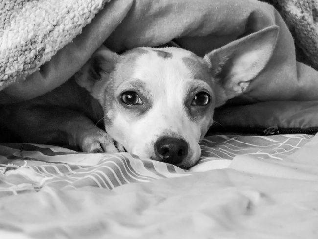 Animal Animal Themes Bed Close-up Comfortable Dog Dogs Domestic Animals Magazhu No People Pets Relaxation Relaxing Resting Showcase August Yelapa
