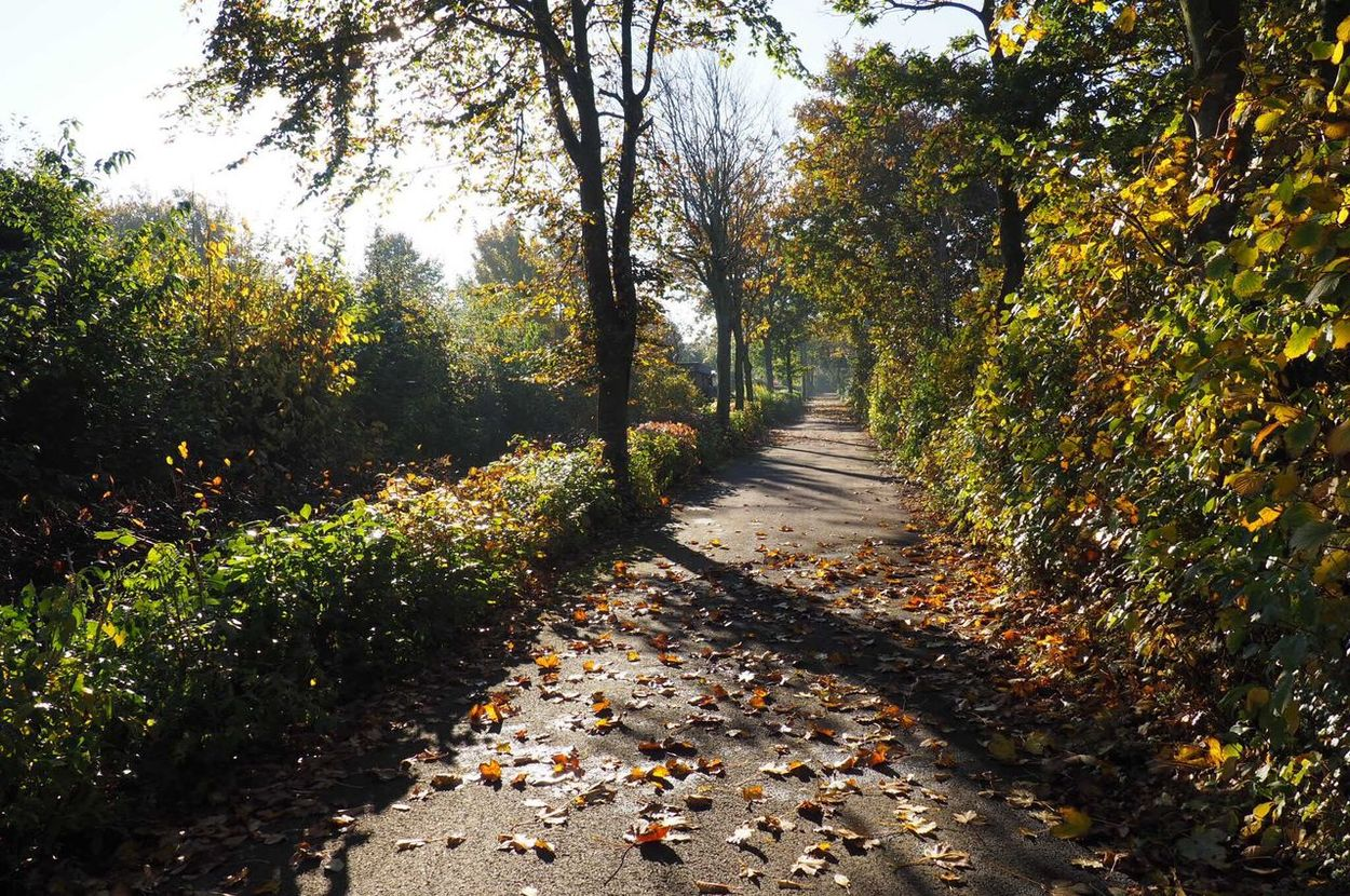 Autumn Outdoors Scenics Beauty In Nature Leaf Road Walking Day Photography Landscape Adventure