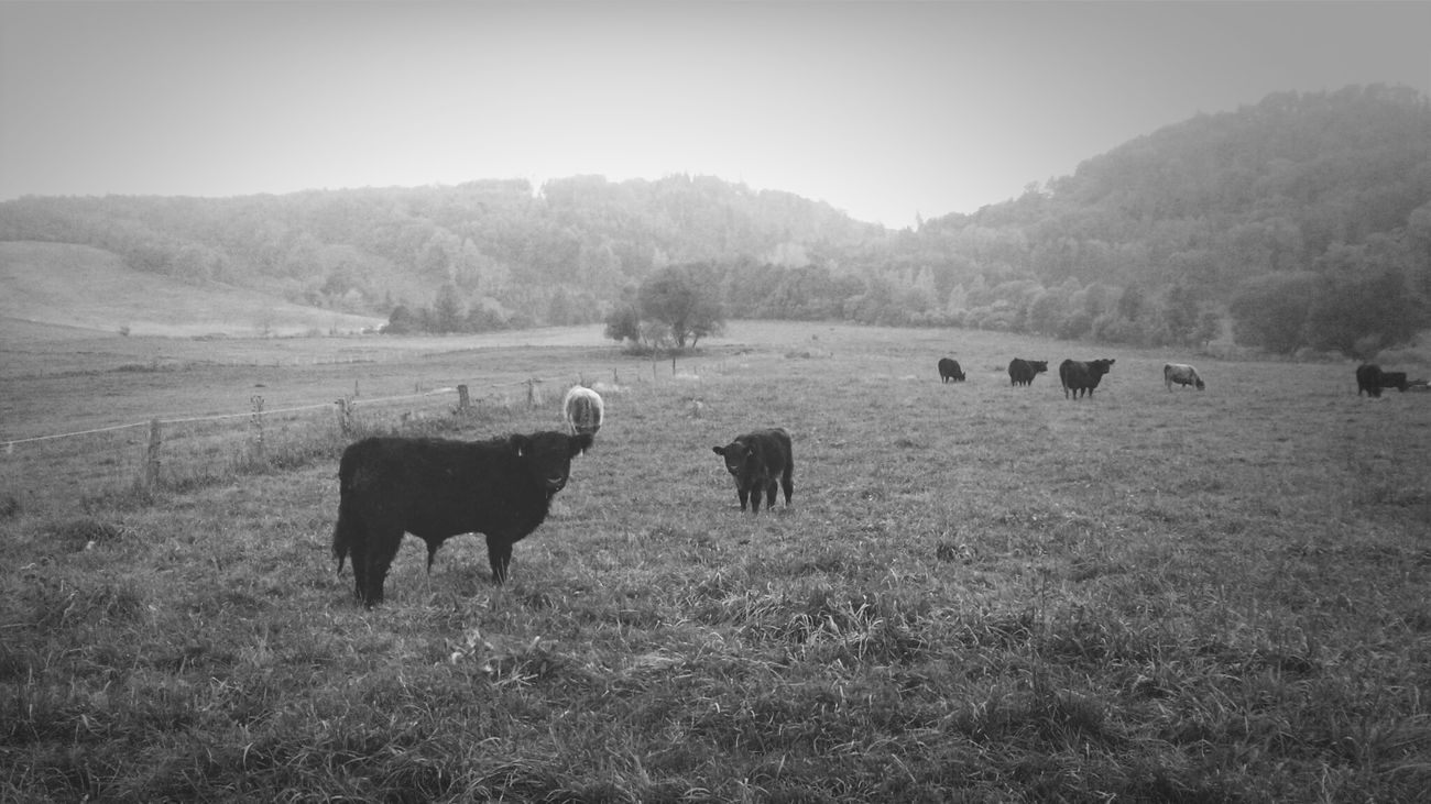 Nature Animals Black&white Photography