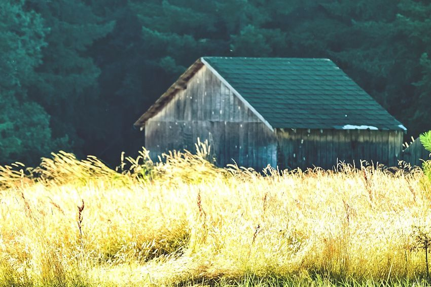 Abandoned Buildings Golden Fields The Golden Hour Ridgefield Wa Nature Photography Road Tripping WA State Country Roads Travel WA State Last Minute Shot Nikon D3300 Building Exterior Beauty Of Abandonment PNW Photography Pnwexplored PNW Summers Summer 2017 Collection Tranquility In Photography Pnwisbest