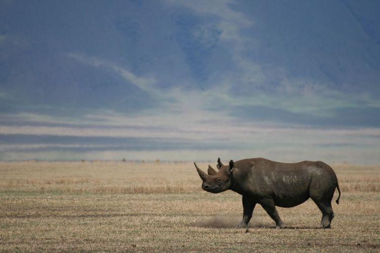 Tanzania Africa Ngorongoro Crater Wildlife Wildlife & Nature Landscape Nature Rhino Neighborhood Map The Great Outdoors - 2017 EyeEm Awards
