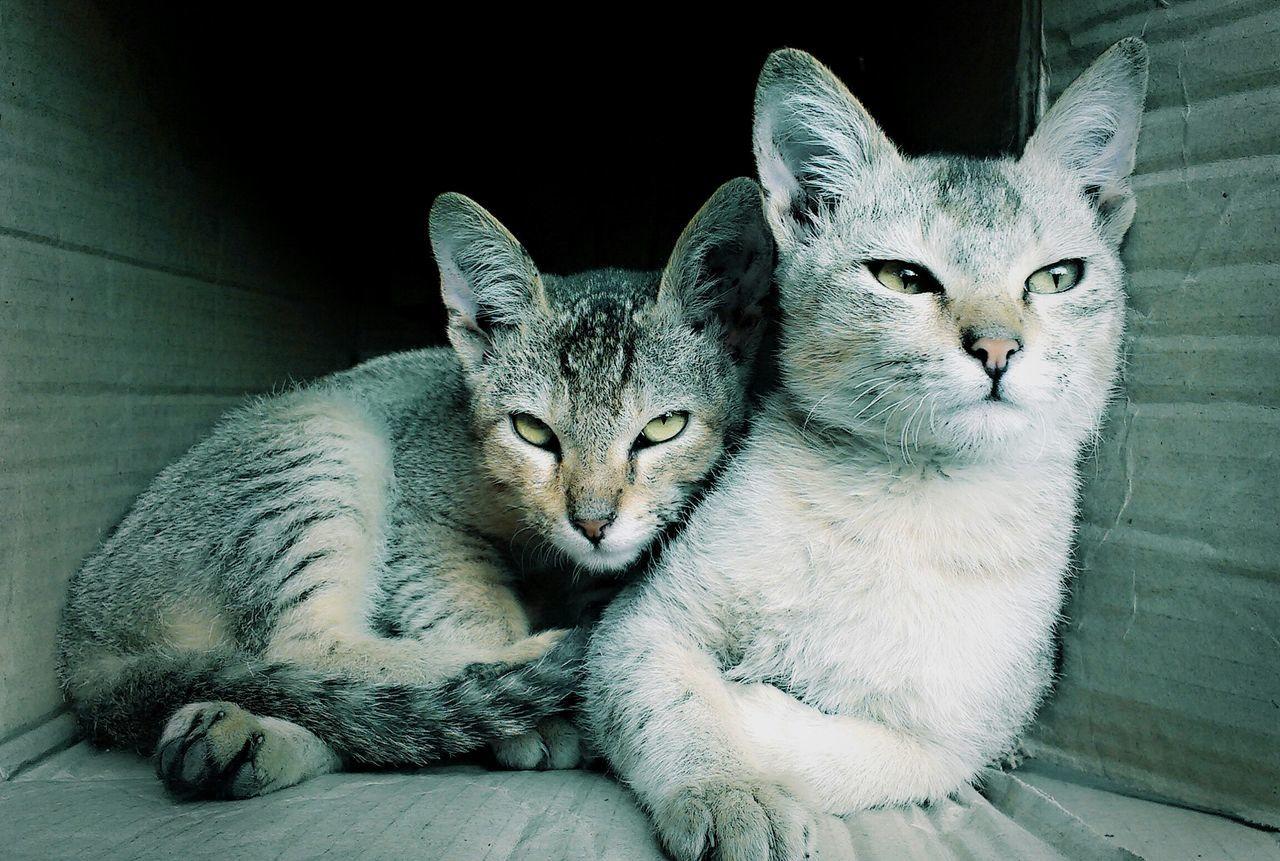 Best Friend Forever ;) Cute Cats Cute Cats (>^ω^<) Cute Cats EyeEm Cute Cat Lovers Cat Photography Cat♡ Cats Cats Of EyeEm Catslife