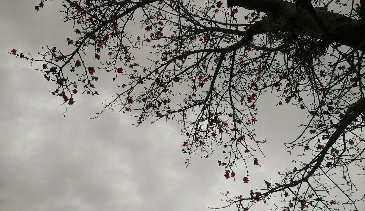 Tree Shadow Sky