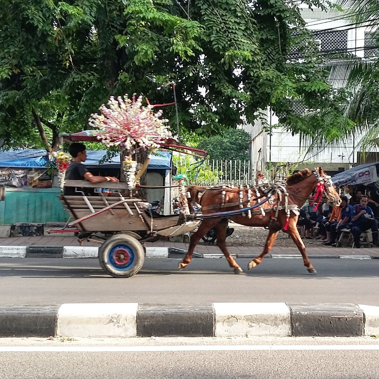 horse, transportation, domestic animals, street, horse cart, tree, mammal, real people, day, mode of transport, road, one animal, outdoors, men, built structure, land vehicle, building exterior, architecture