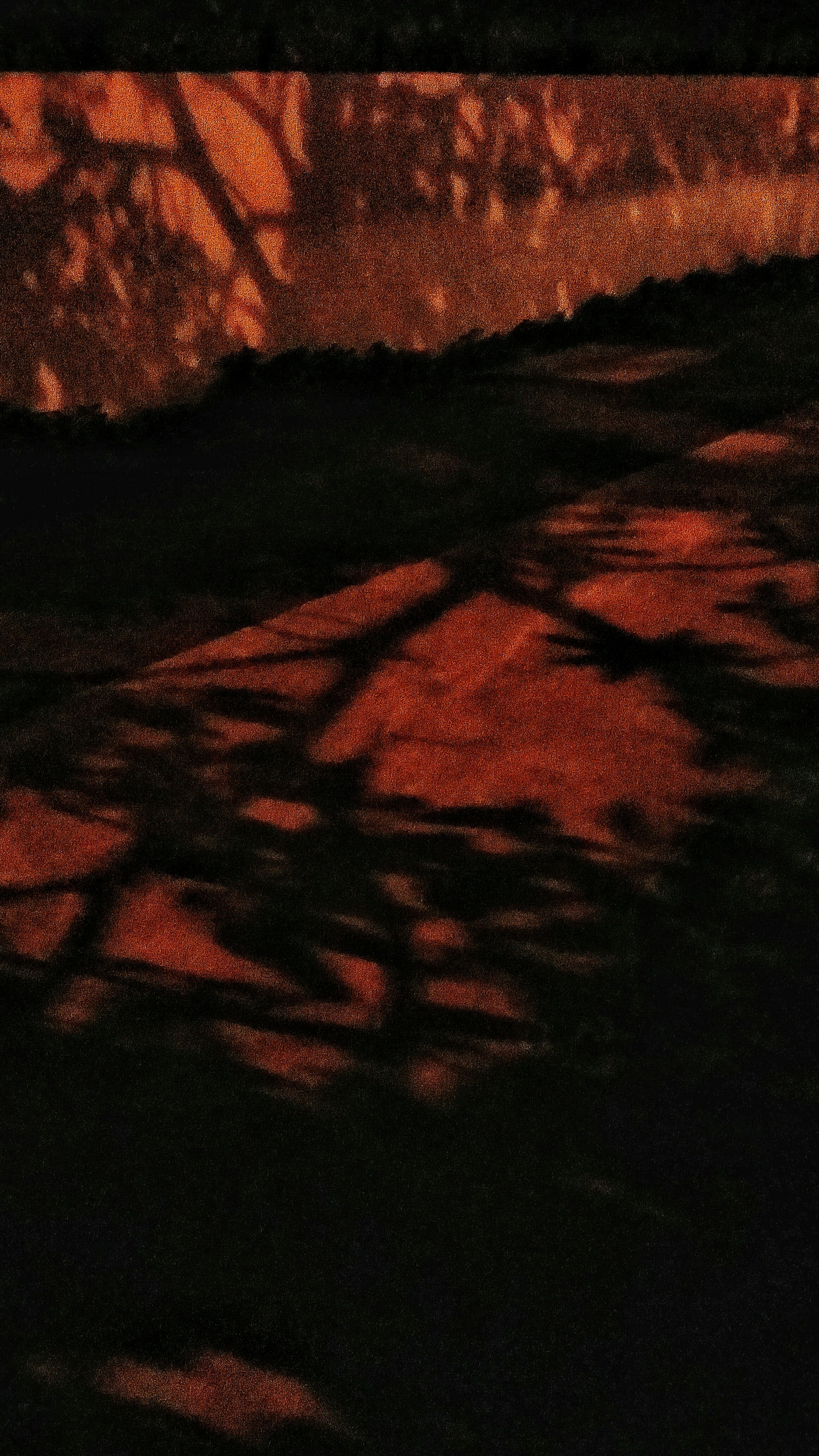 Trees Shadows Light And Shadow Streetlight Way Home Condo Walls Nightphotography Eyeemcollection Eyeemphotography EyeEm Gallery