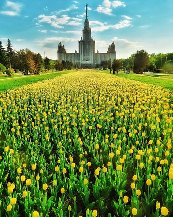 Moscow Moscow State University Flowers