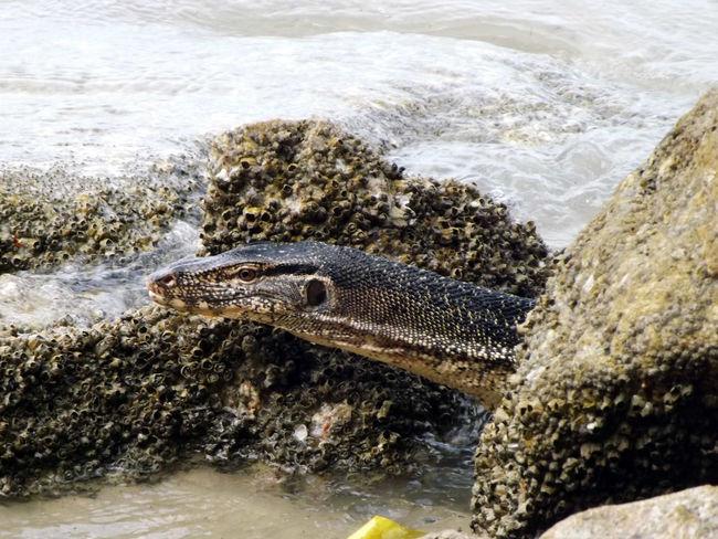 Beauty In Nature Nature Outdoors Water Wildlife & Nature Animals Varan Malaysia