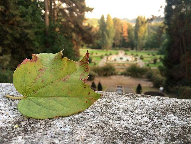 Autumn Colors Park Take Photos Walking Around Relaxing Beautiful Love Sun Photography