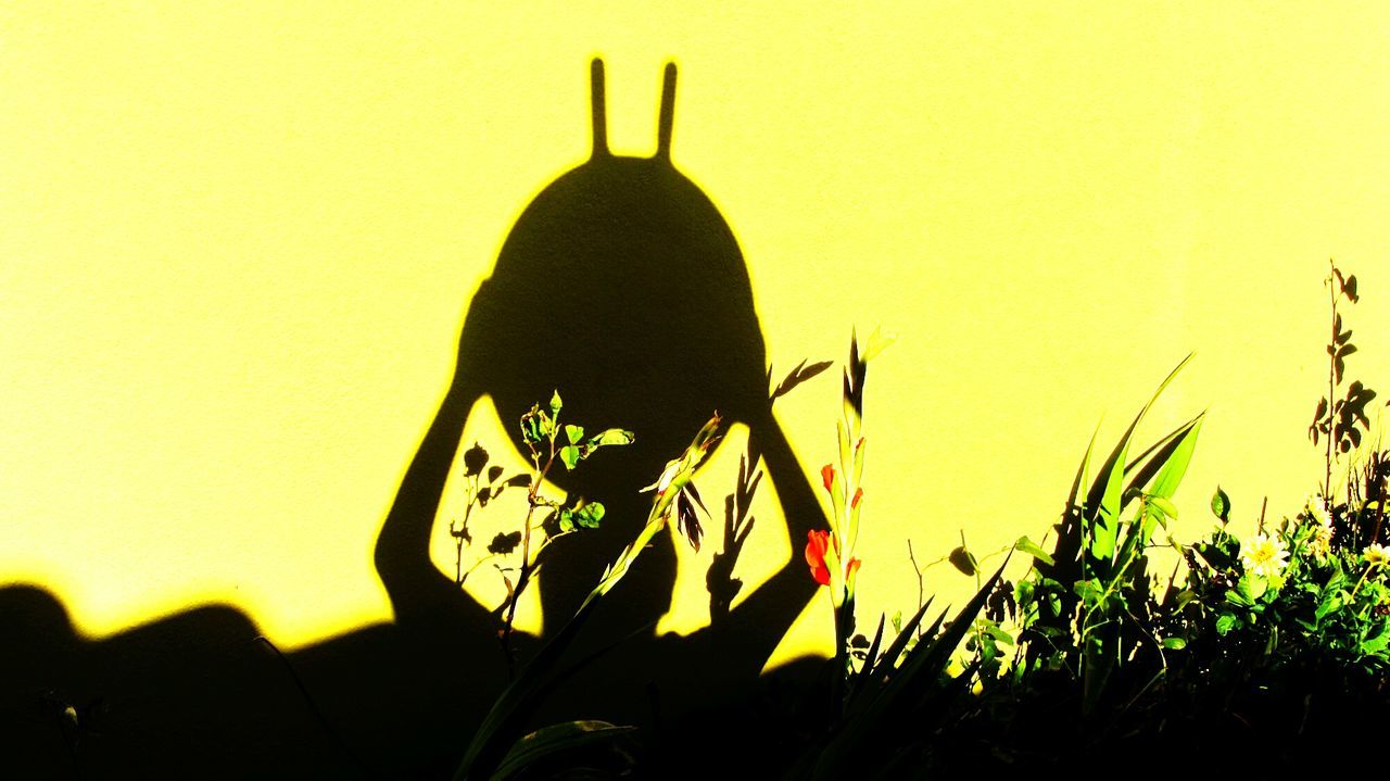 silhouette, yellow, outdoors, growth, shadow, sunset, nature, clear sky, one person, flower, close-up, day, sky, people