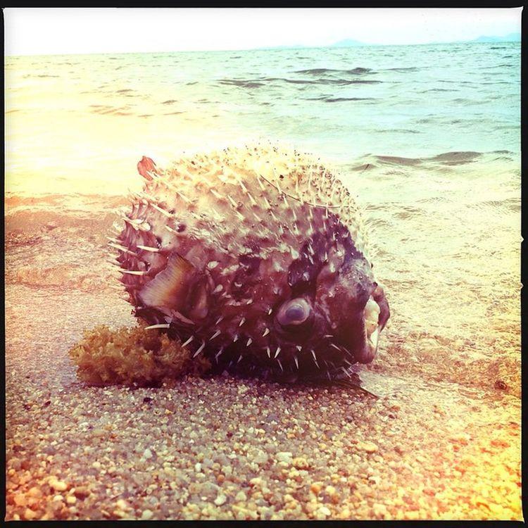 Sea Travel Fish Photography Travelblogger Iphangan
