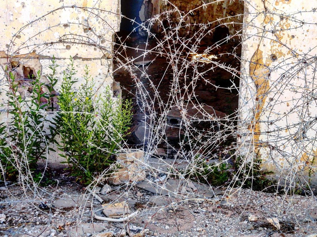 Khiam Lebanon Detention Center Prison Outdoors Nature Damaged Growth Tree No People Day Abandoned Plant Close-up Architecture Barbed Wire Torture