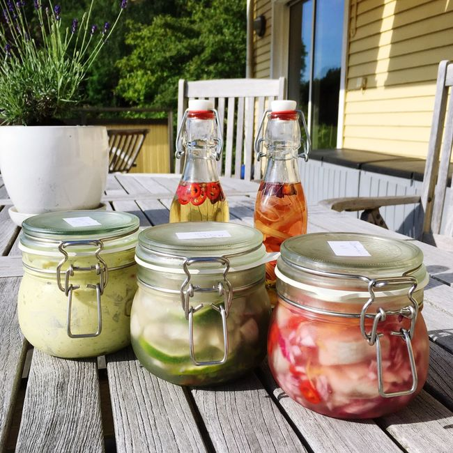 Home made pickled herring and schnapps for Swedish Midsummer festival Artisan FFreshnessNo People Summer Food Sweden Scandinavian Food Scandinavia Summer Patio Homemade Homemade Food Herring Pickled Herring Tradition Midsummer Midsummer In Sweden Cultural Heritage