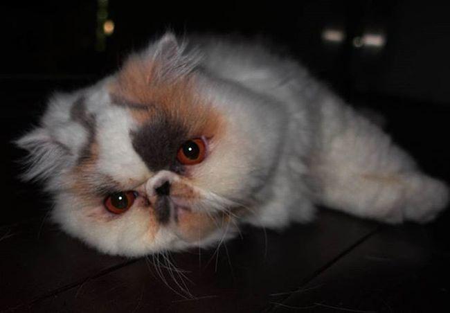 Chilling Cats Catsofinstagram CatsOfTwitter Persians Naturelovers Natureporn Sonyrx100m4