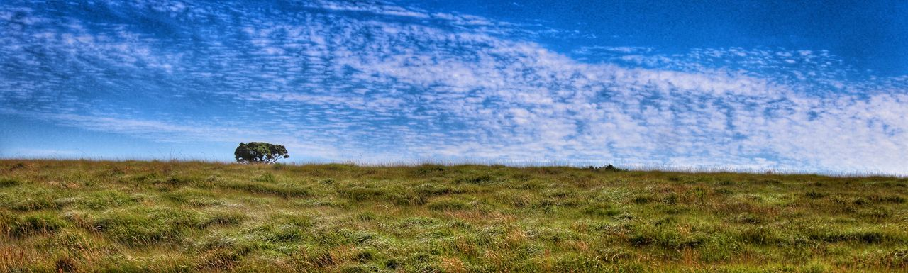 Panoramic View Of Grassy Landscape Against Cloudy Blue Sky