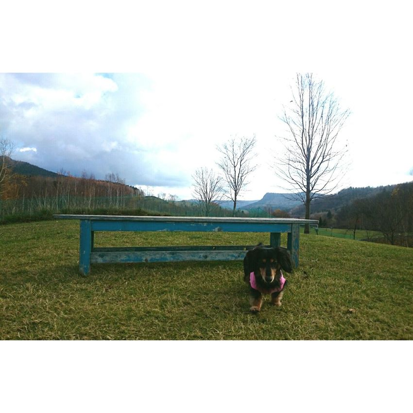 Mydogs ダックス Dogoftheday Dogpark Favorite Places 北海道 Cute Animals Dogs Dachs Smile