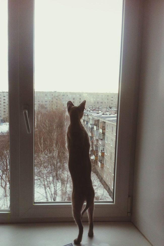 Cat Cat Sphinx Window