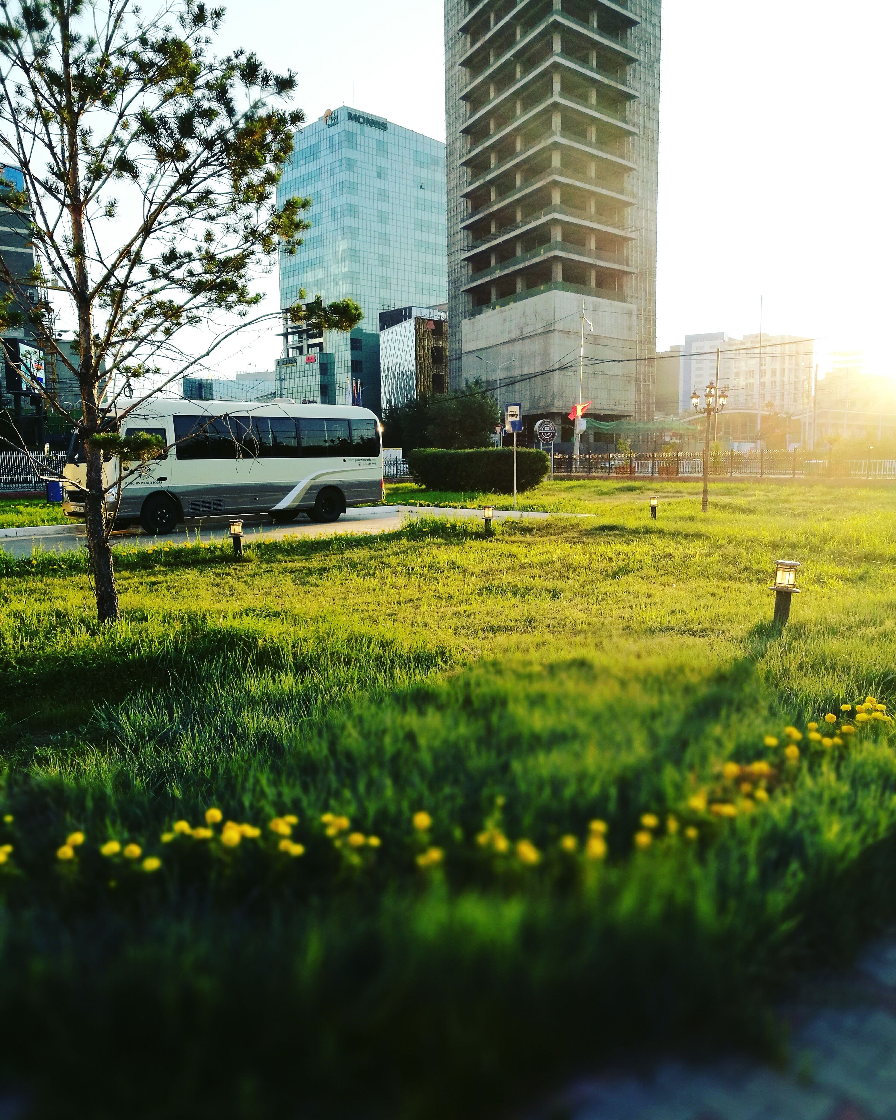 car, architecture, grass, built structure, building exterior, growth, skyscraper, city, day, outdoors, no people, tree, nature, sky