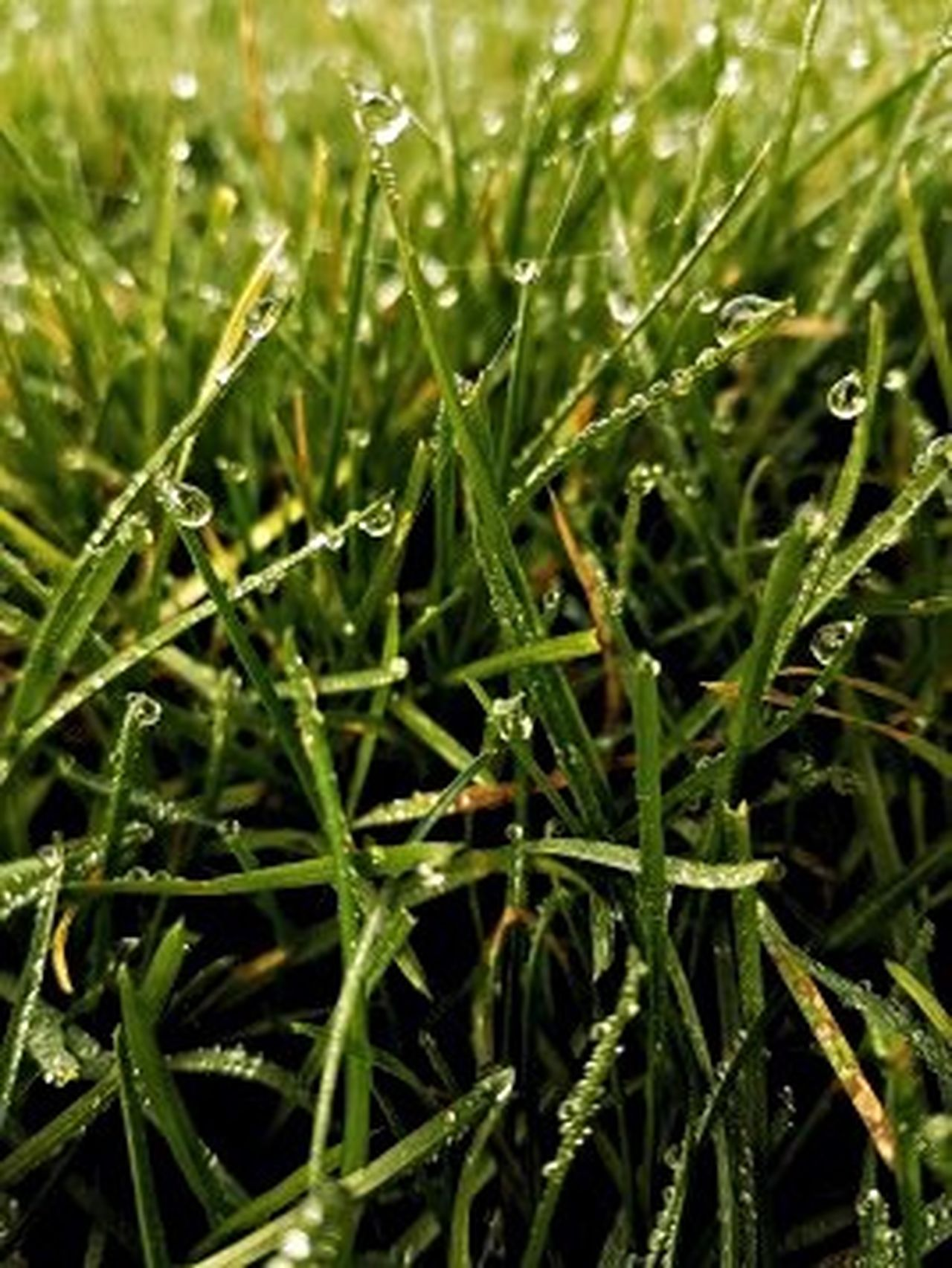 Nature Green Color Full Frame Plant Freshness No People Outdoors Growth Drop Close-up Backgrounds Beauty In Nature Water Grass Day Rhi-Rhi's Photography Shutter Speed