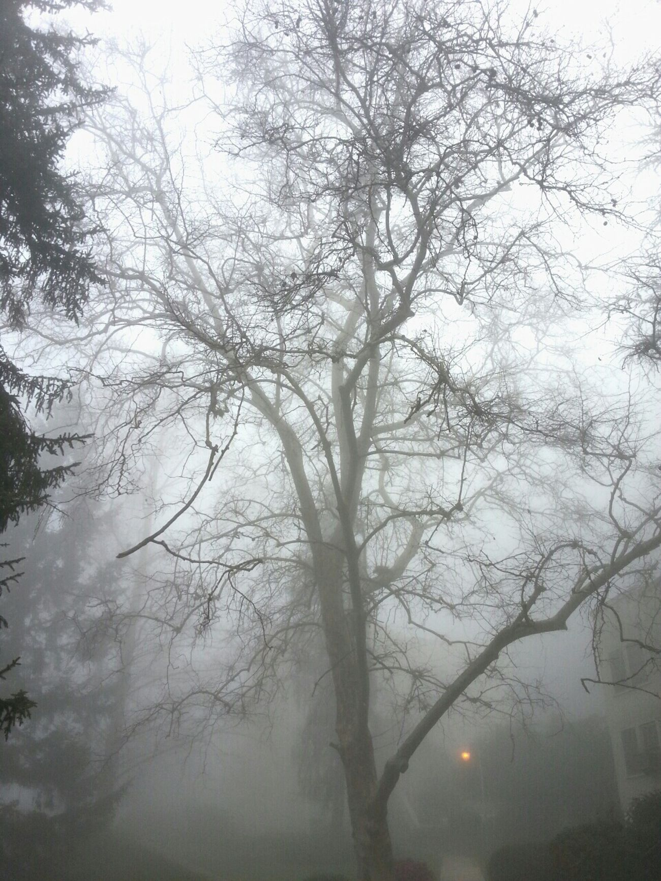 (Tree - Leaves ) + thick fog = Creepiness Early Class Foggy Morning Good Morning World!