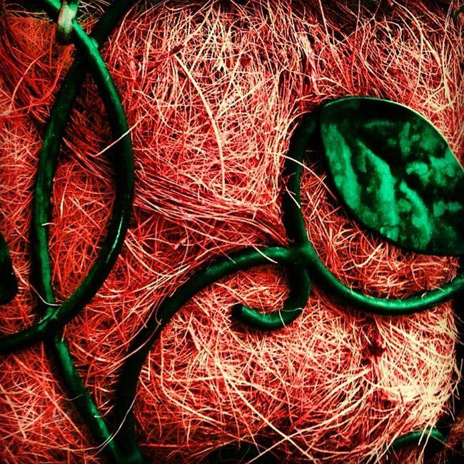 #ti_break #csummerpic #greenfriday #cgreenpic #photoblipoint #coloredit #coloraesthetics #happycolortrip #coloronroids #popyacolor #icoloramas #photooftheday #pixoftheday #dhexpose #artporn #photopainting #modernart #arte #allshots #artistic #wallart Popyacolor Coloronroids Photooftheday Cgreenpic Arte Photopainting Wallart Artporn Artistic Dhexpose Allshots Csummerpic Greenfriday Ti_break Pixoftheday Modernart Photoblipoint Ig_artgallery Happycolortrip Icoloramas Coloraesthetics Coloredit