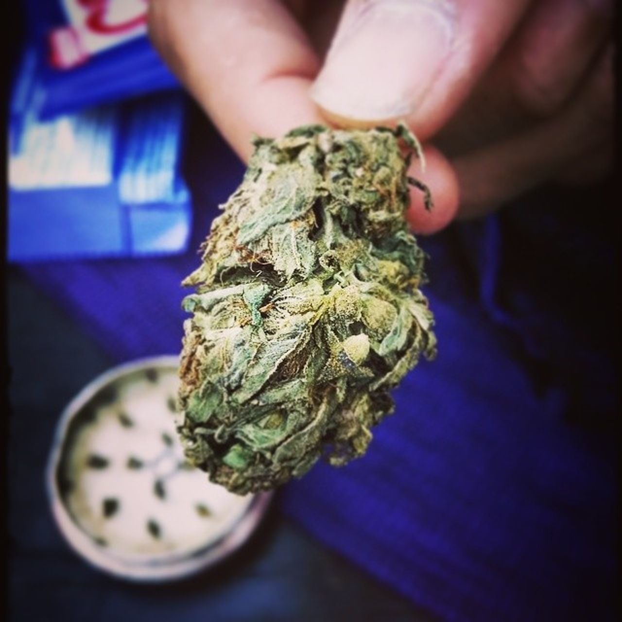 human hand, real people, holding, marijuana - herbal cannabis, one person, human body part, close-up, indoors, blue, men, day, people