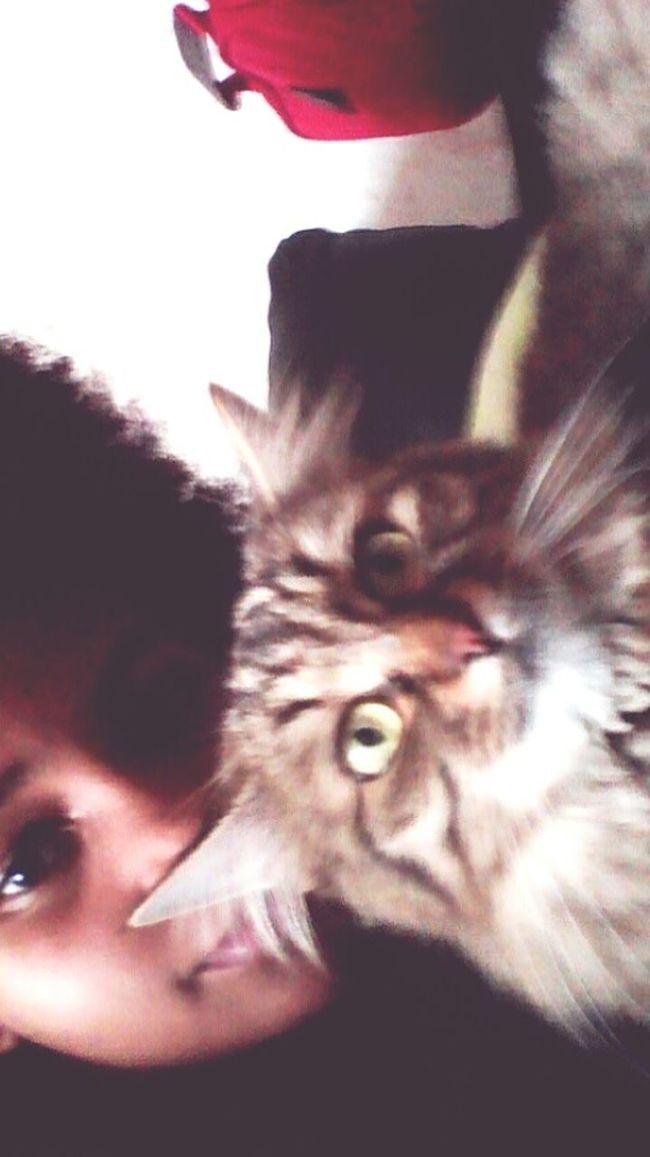My cat 🎀⚡ Enjoying Life First Eyeem Photo