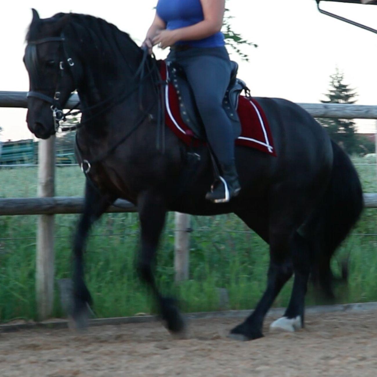 Galopp Pferd Unterricht Photo No Filter Lifestyles Horse Outdoors Stall 2016 Horse Riding Horse Life Riding Lesson Photography Horse Photography  Lesson Summer Summertime 🌞