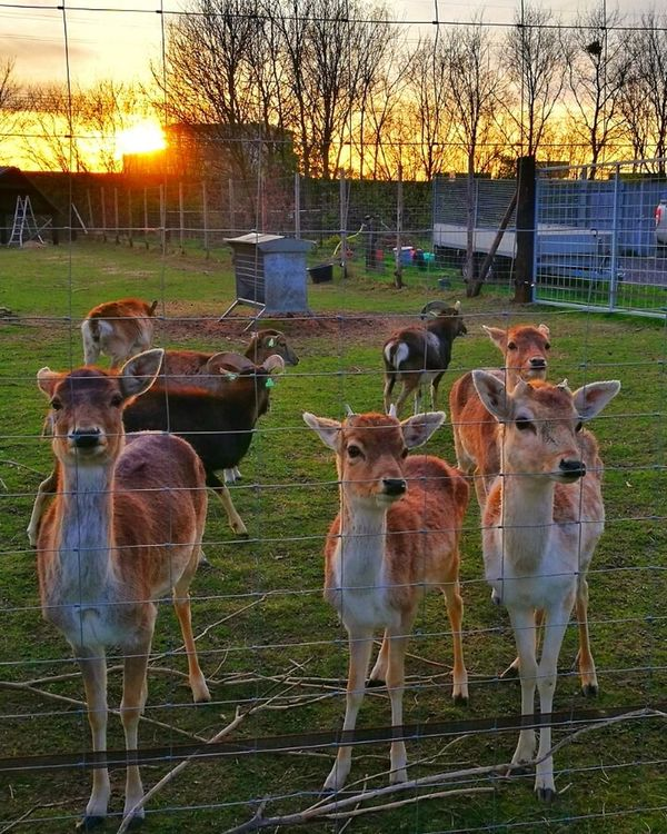 Netherlands ❤ Domestic Animals Beauty In Nature