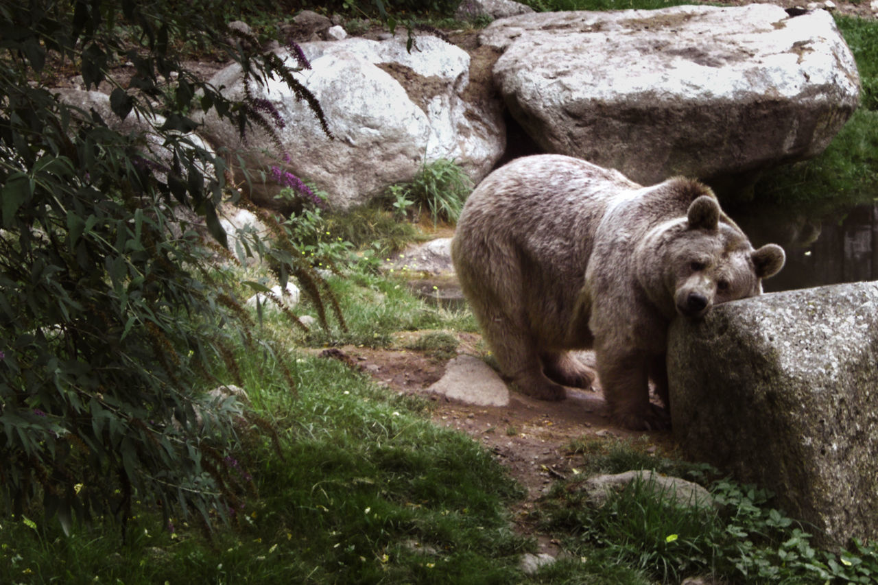 Animal Themes Animals In The Wild Bear Nature Ours Ourselfieworld Ourstory Outdoors